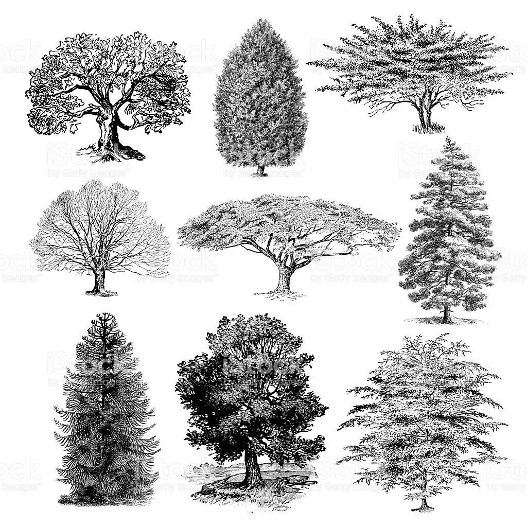Grundriss Zeichnen Online A Collection Of Forest Tree Silhouettes Illustrations