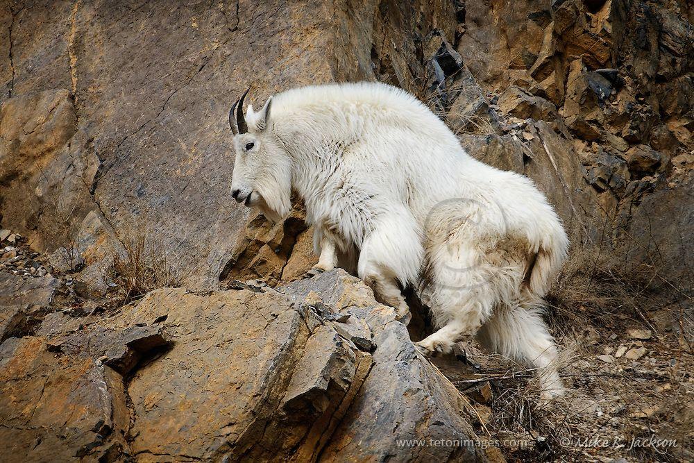 17++ Phoenix mountain animal hospital ideas