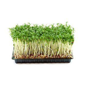 15 Astonishing Benefits Of Garden Cress Halim Seeds With Images