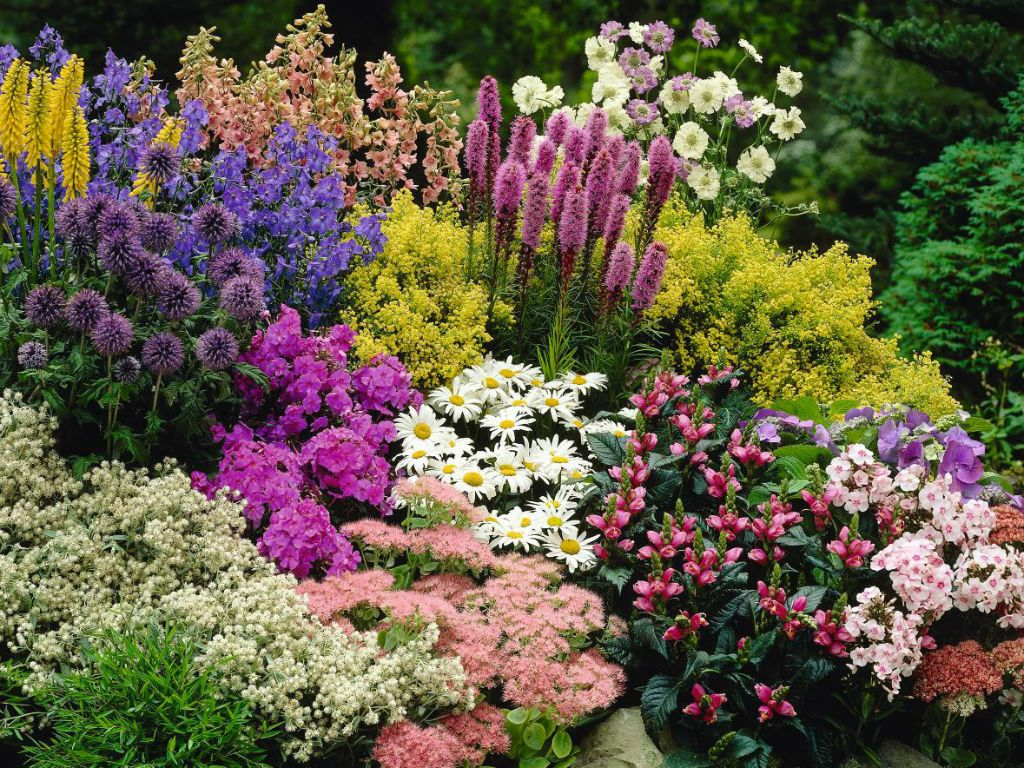 Perennial plant pinterest flowering plants perennials and plants a perennial plant or simply perennial is a plant that lives for more than two years perennials especially small flowering plants that mightylinksfo