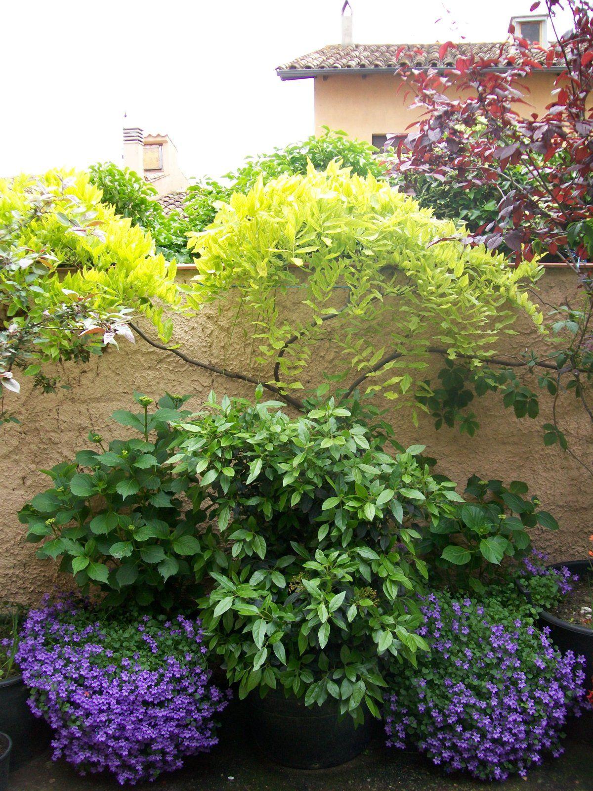 Pin En Jardines Y Terrazas