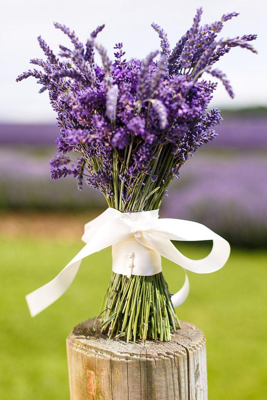 Como Cultivar Lavanda Em Casa Flores Pinterest Lavender