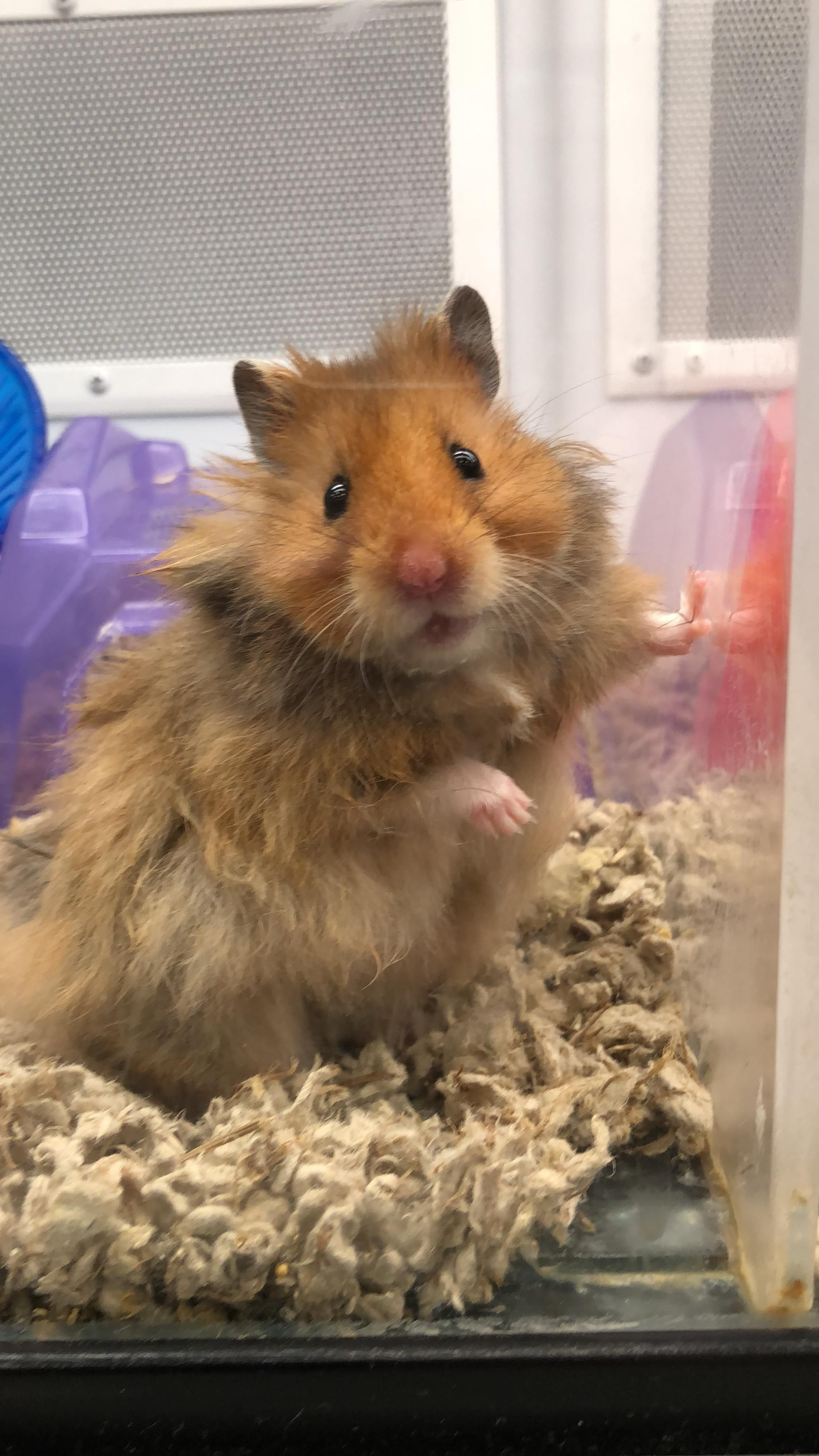 Cuteeee image by Victoria Jackson in 2020 Hamster life