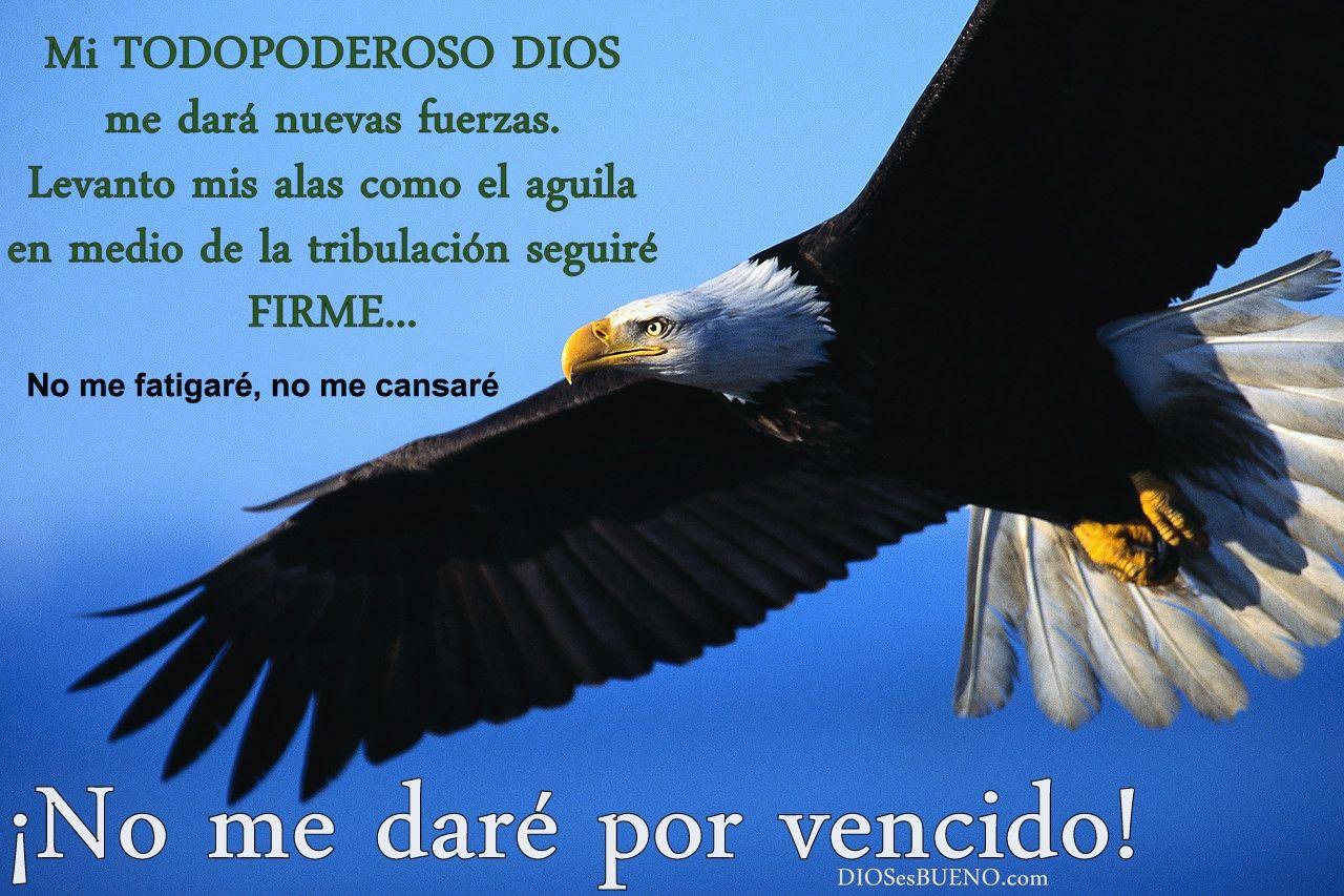 frazes de fortaleza | Imagenes cristianas con frases ~ Fotos e ...