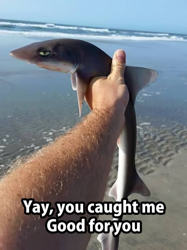 Yay You Caught Me Very Funny Pictures Funny Pictures Funny Animal Pictures The best memes from instagram, facebook, vine, and twitter about sarcastic meme. pictures funny animal pictures