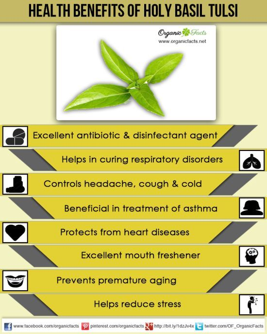 Health Benefits of Holy Basil – Tulsi | For Class | Pinterest ...