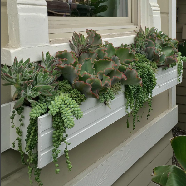 succulent window box in front of
