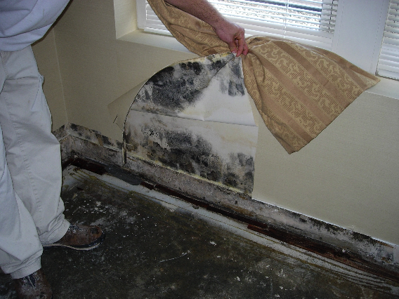 Damage from mold under a window, but looks like it comes