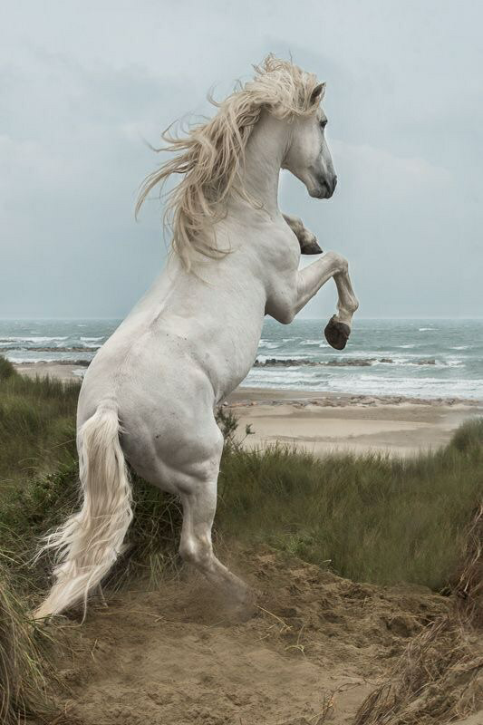 Tumblr Pferd