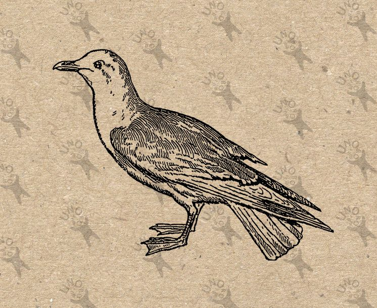 Vintage retro drawing image Seagull Bird Gull Instant Download Digital printable clipart graphic - transfer, iron on, burlap etc HQ 300dpi by UnoPrint on Etsy #hq #png #bw #Ephemera #diy #old #book #illustration #gravure #inspiration #retro #antique #vintage #300dpi #craft #draw #drawing  #black #white #printable #crafts #transfer #decor #hand #digital #collage #scrapbooking #quality