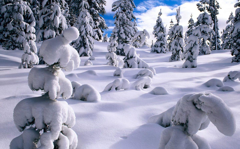 Winter Wonderland Scenes Winter Wonderland Dreamy Snow Scene Wallpaper 1440x900 No 7 Desktop Winter Scenery Winter Scenes Winter Pictures