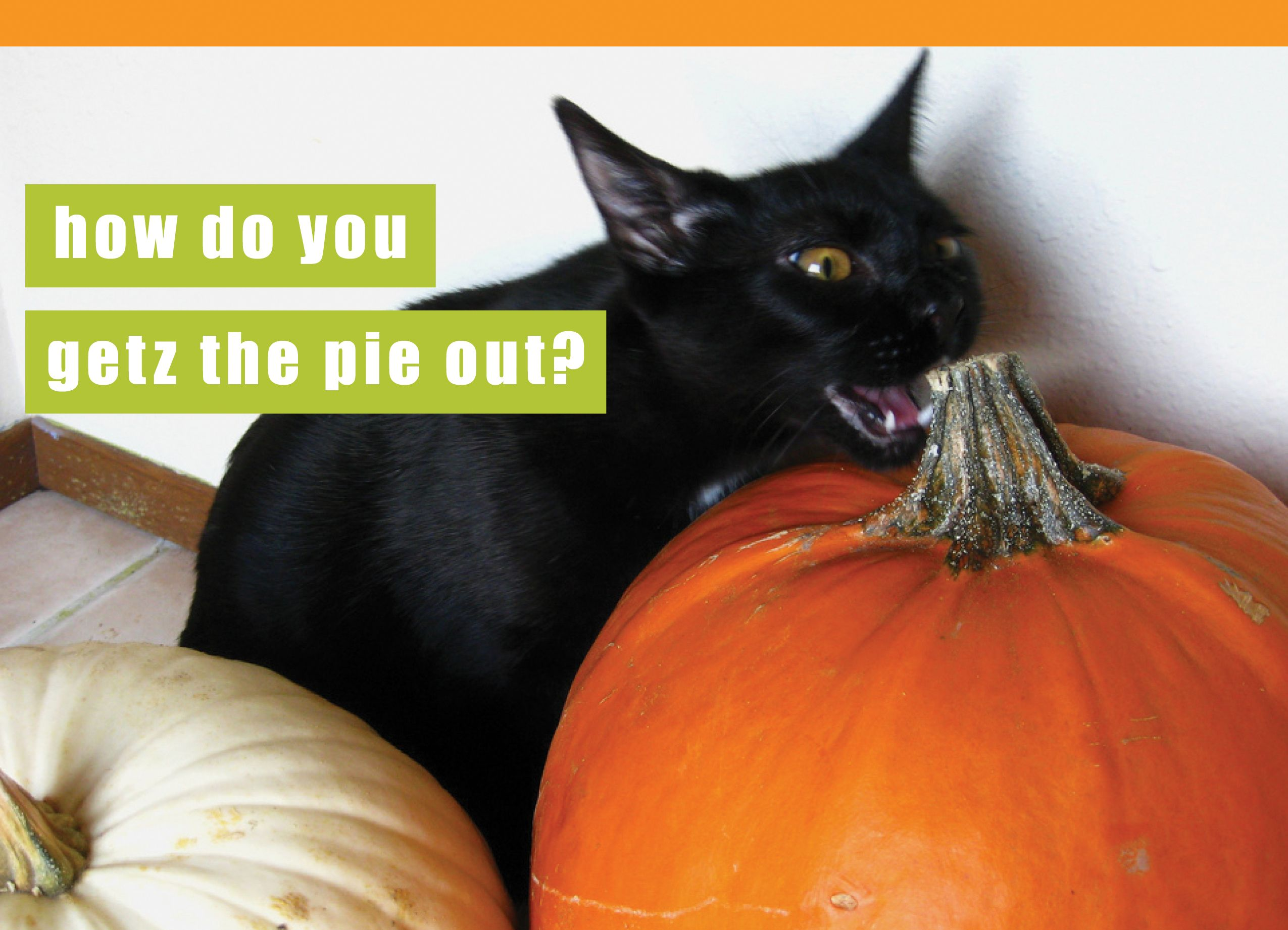 Cat wants his pumpkin pie, from I Can Has Cheezburger