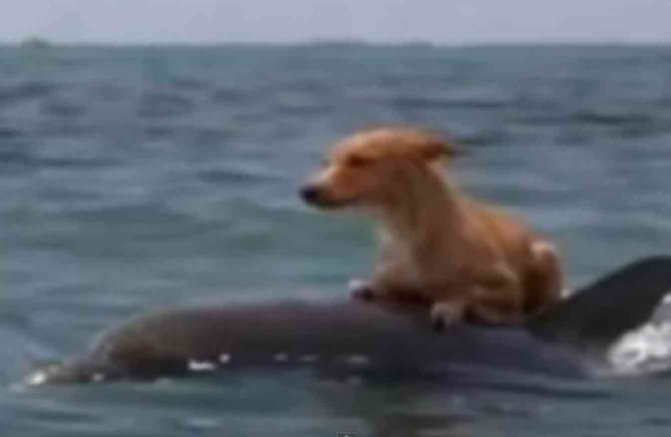 Dolphins Lend A Flipper In Saving A Dog From Drowning Dolphins Animals Beautiful Dogs