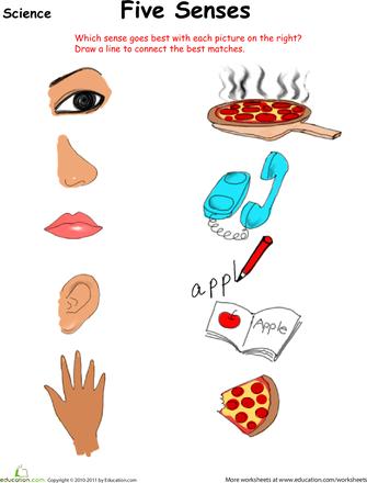 ... Names Worksheets » The Five Senses Worksheet Free - 335x440 - png