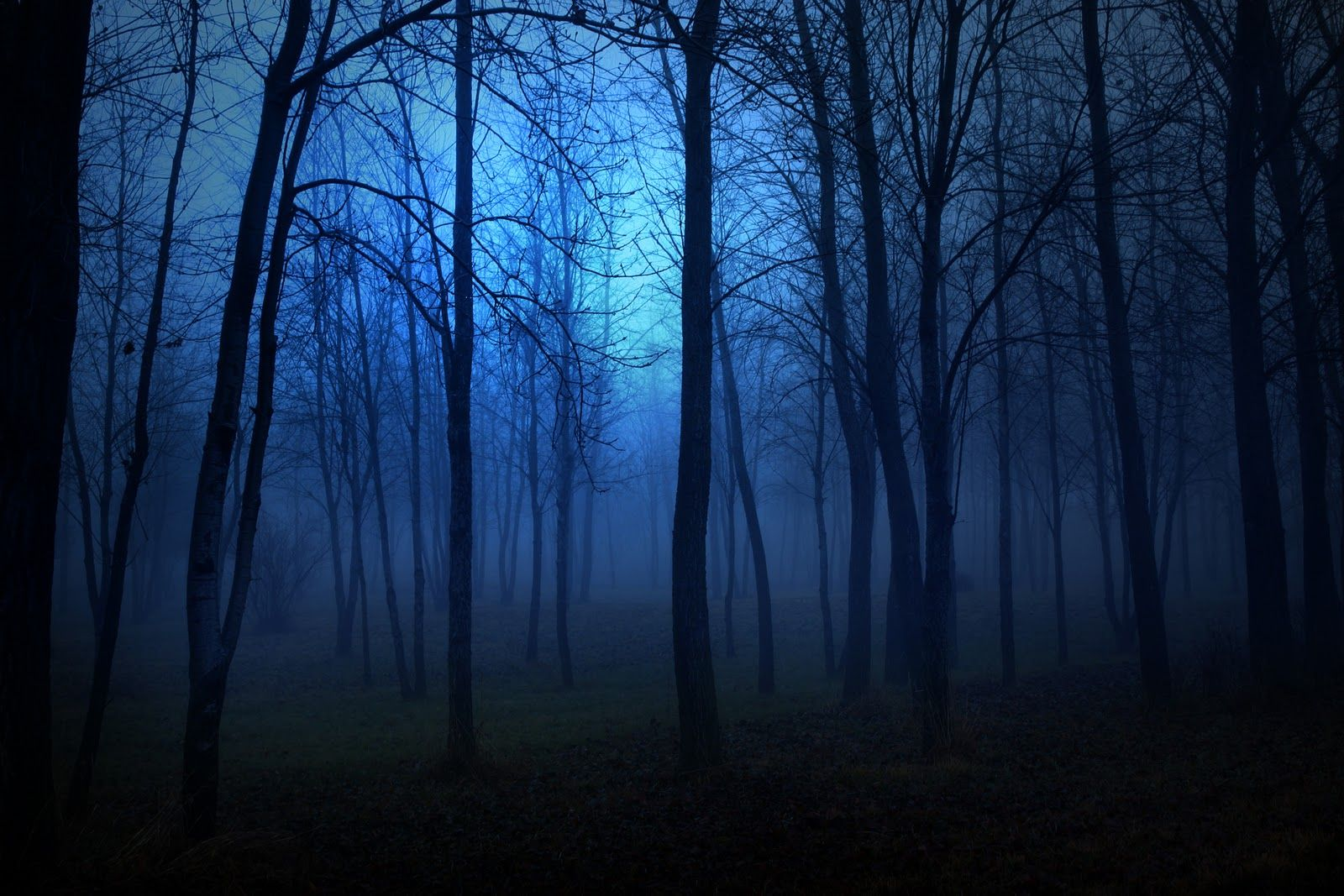Fbi Files The Paranormal Collection Night Landscape Photography Night Landscape Night Forest