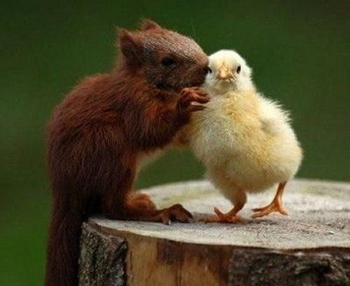 animaux_potes  Source : animalshugging