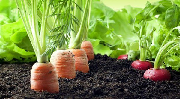 Answers for newbies about spring planting of a Survival Garden. - American Preppers Online