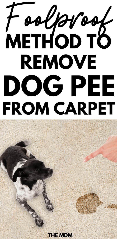 How To Remove Dog Urine Odor From The Carpet Naturally Removing Dog Urine Smell Dog Urine Odor Remover Dog Urine