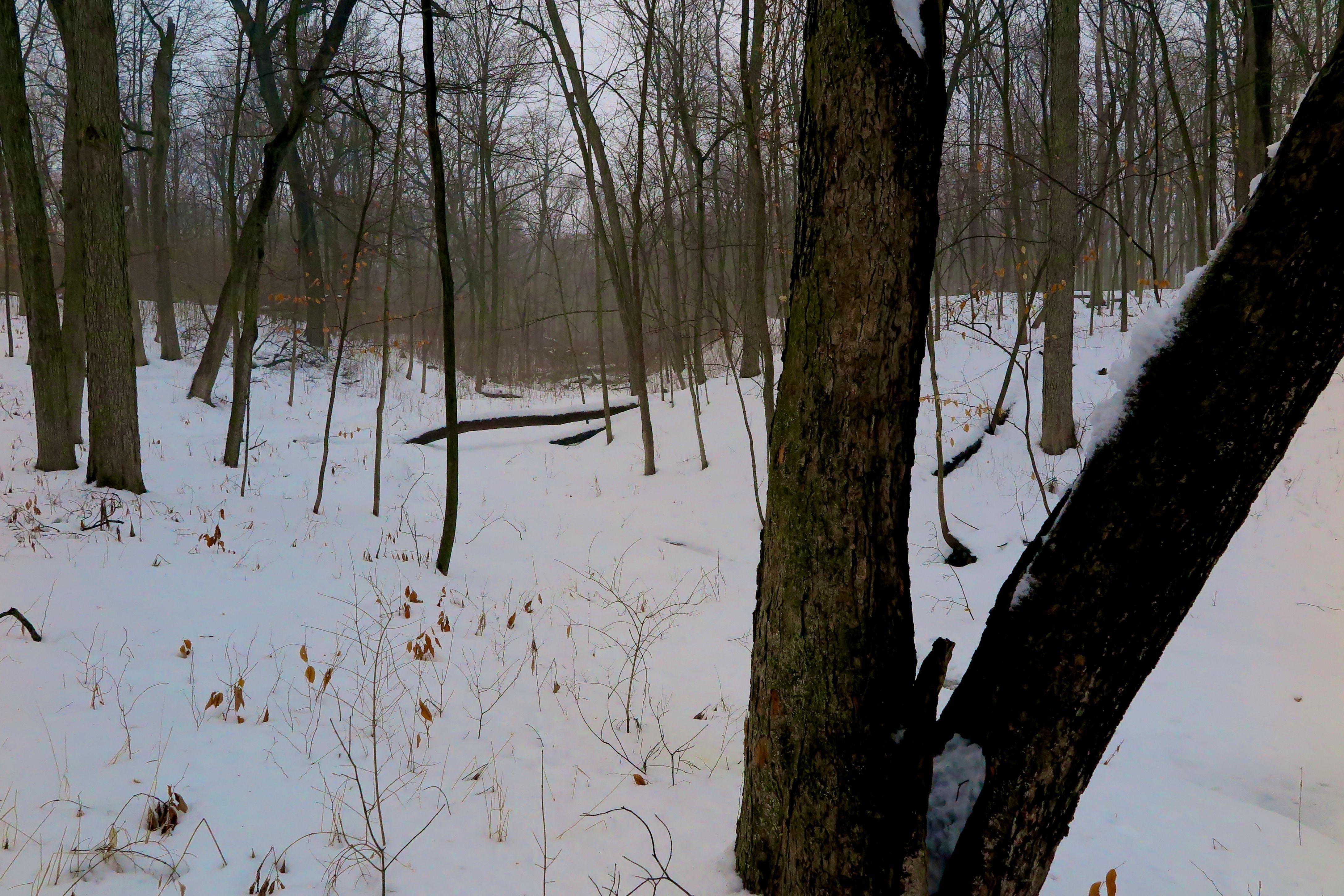 Creek Winter