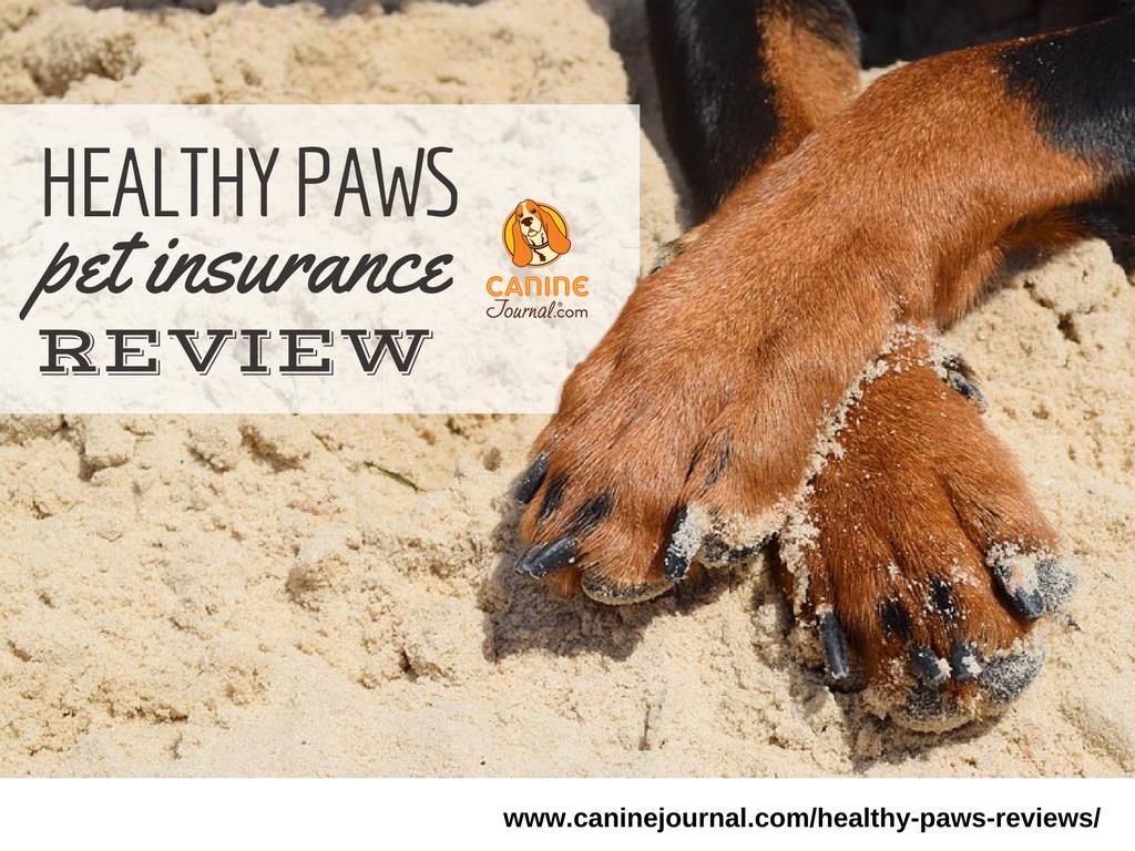 Is healthy paws the best pet insurance provider pet
