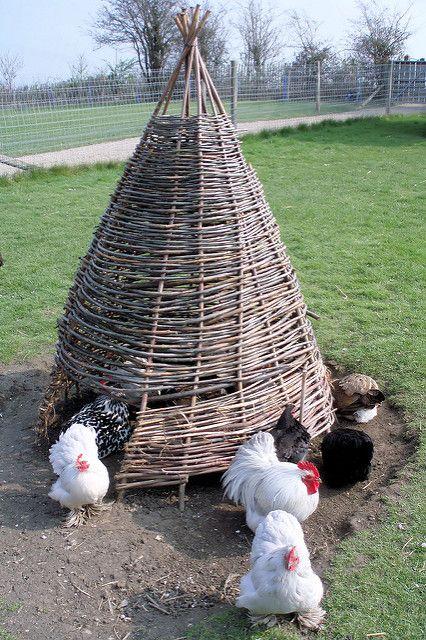 Chicken wigwam | Flickr - Photo Sharing!