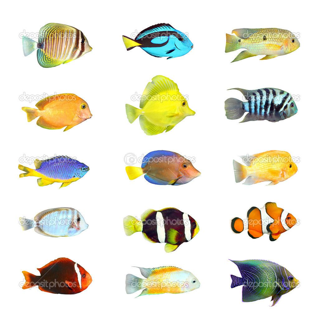 Tropical Fish Pictures Hd Wallpapers Tropical Fish Pictures Tropical Fish Fish Clipart