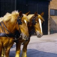 jutland horse - Yahoo Image Search Results