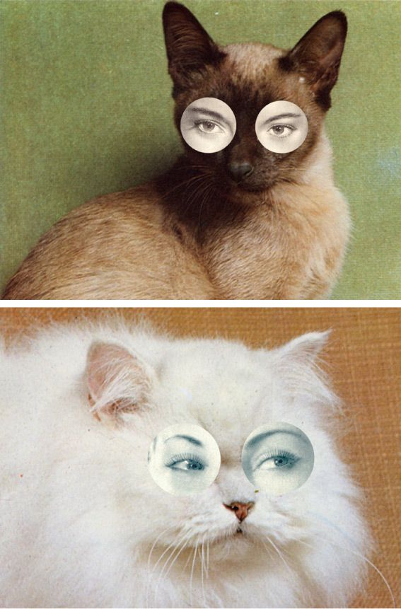 Photo collage using human eyes and cat faces