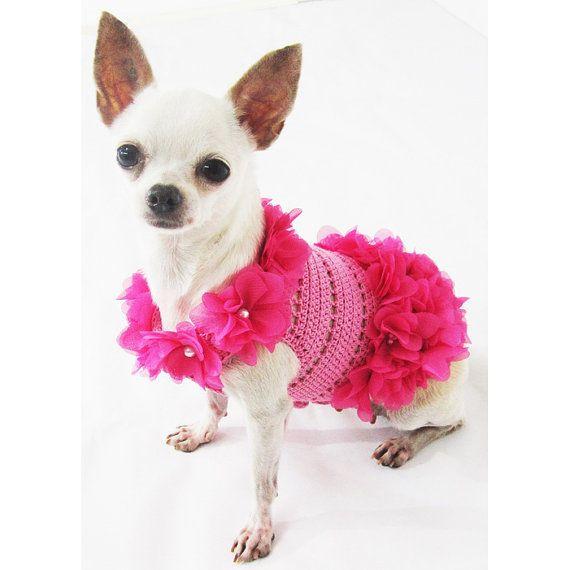 Pin Em Chihuahuas My Favorite
