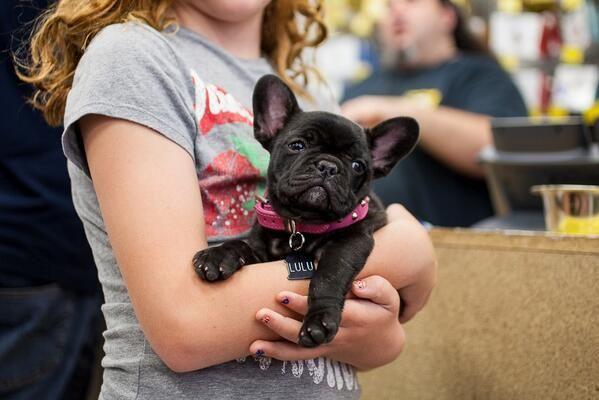 Stud Dog Collar Pet Warehouse Dog Jumpers Leather Dog Collars