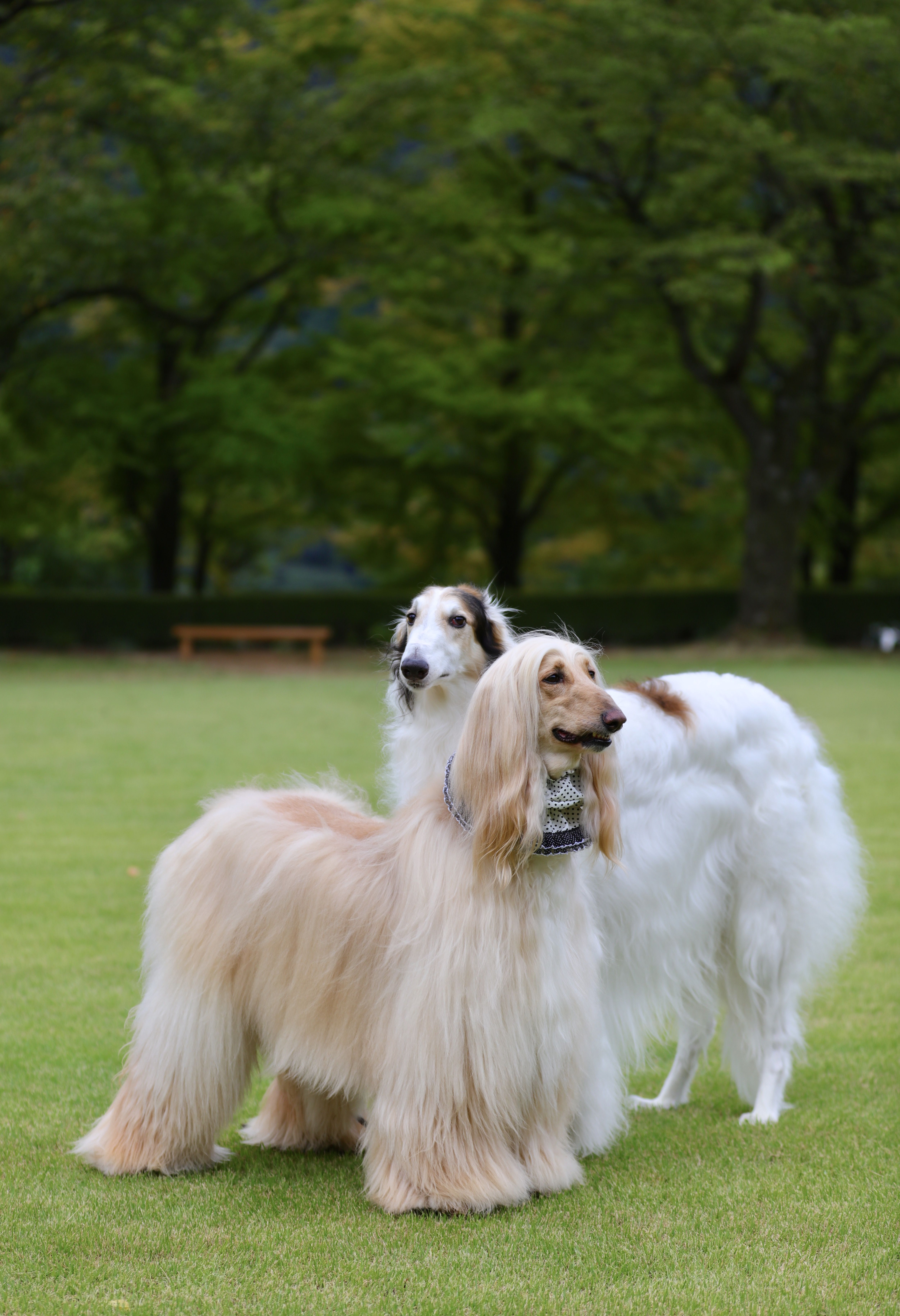 List of The Oldest Dog Breed in The World