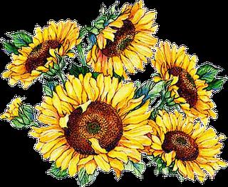 Beautiful clipart sunflowers | Sunflower illustration ...