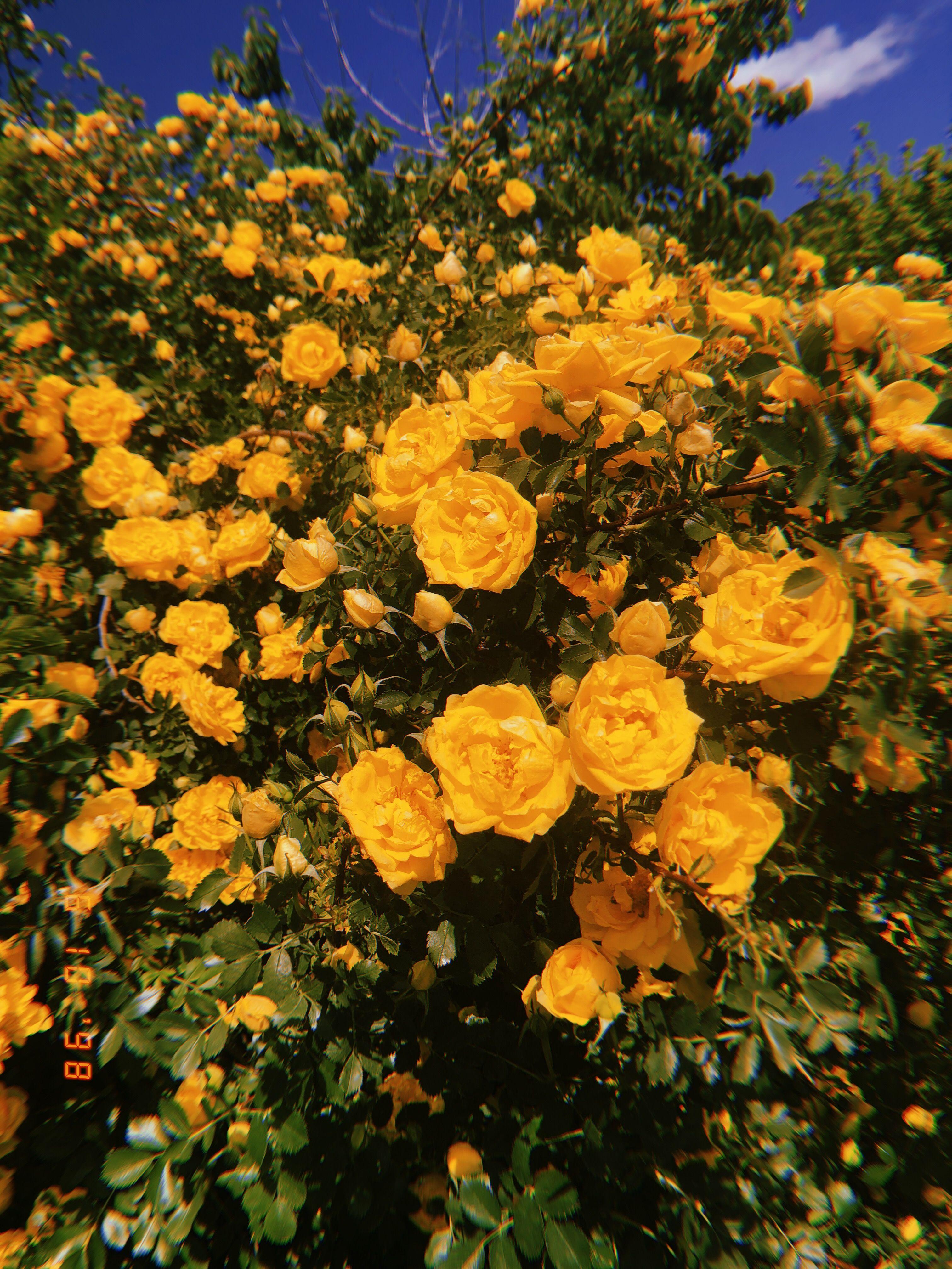 Yellow Yellow aesthetic Pinterest Yellow, Yellow