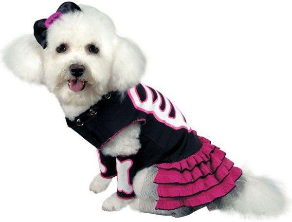 Bret Michaels Pets Rock Collection Pet Costumes Pet Halloween