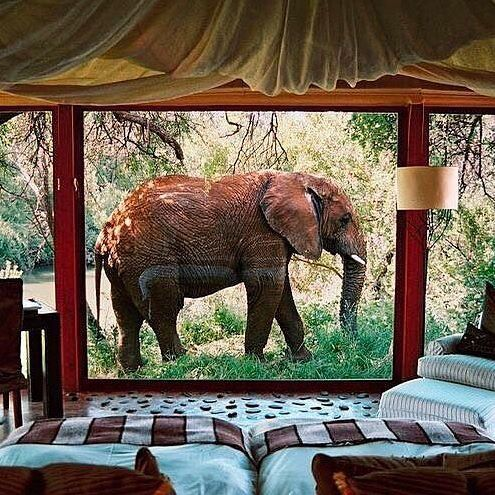 southafrica africa photo credit: oolalalexa | safari en afrique