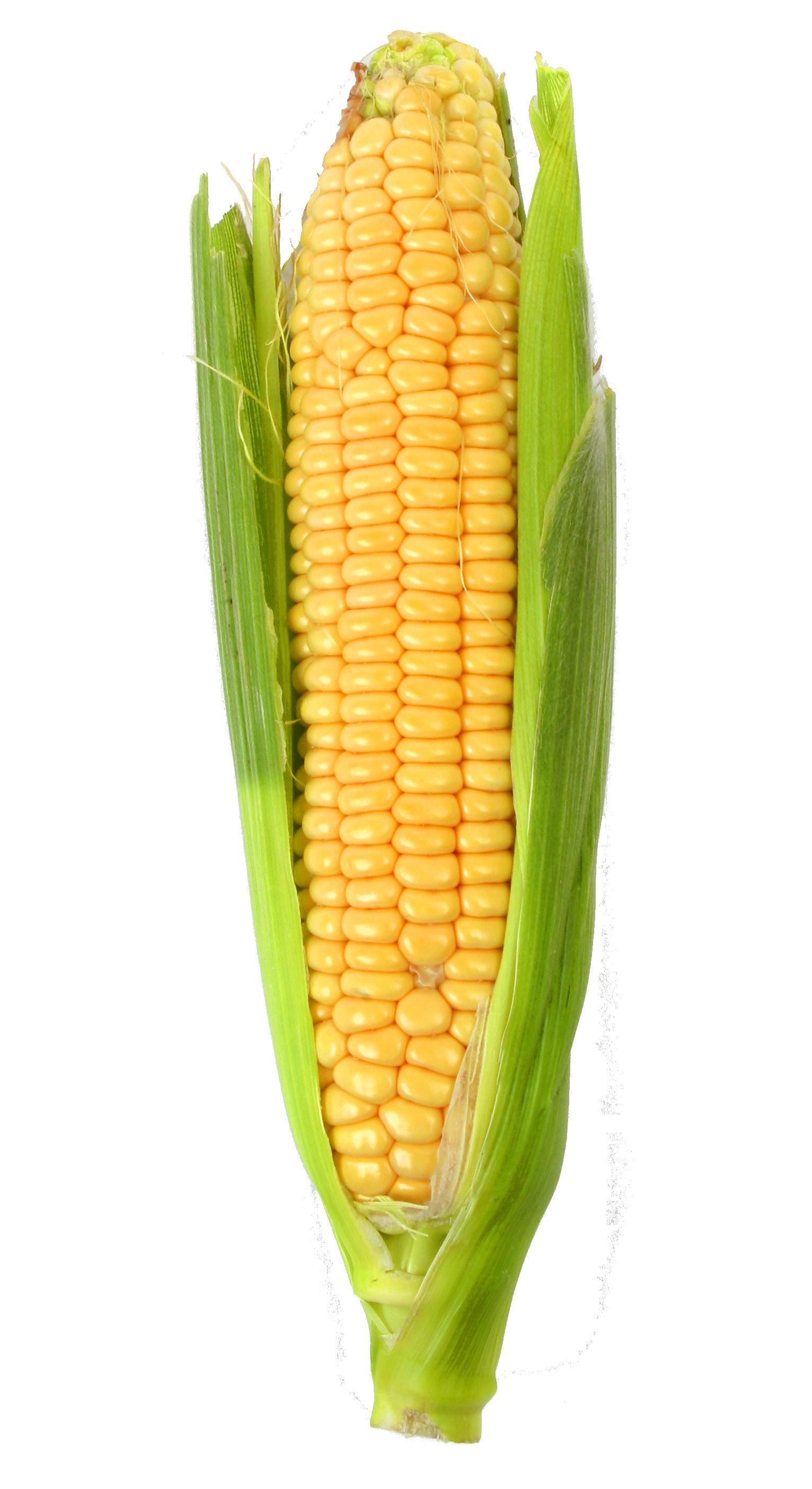 Corn PNG Image Corn, Popcorn seeds, Image