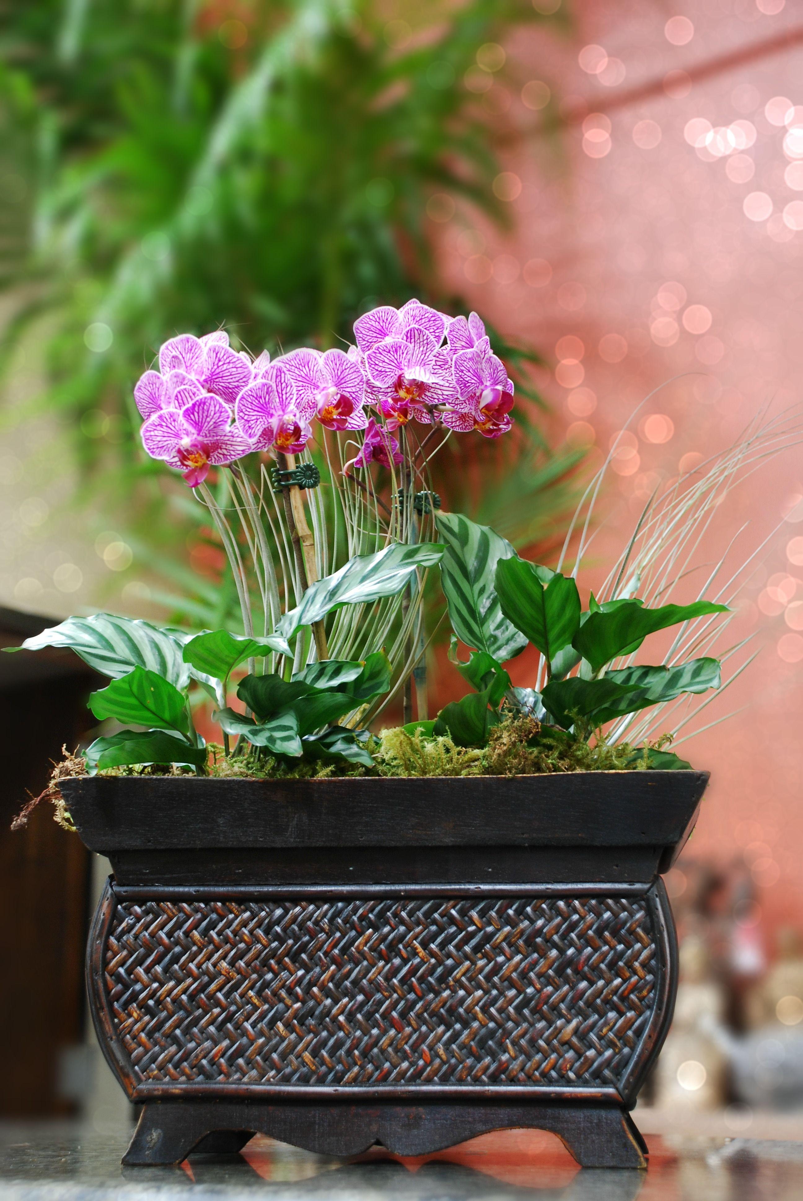 Simple Orchid Arrangement