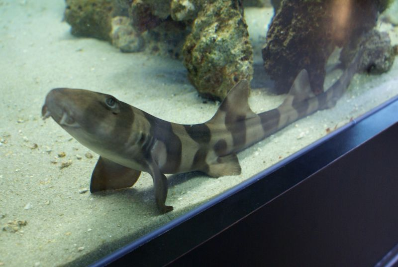 Bamboo Shark Tank | Bamboo Play Dead Good Boy Clock House Fish Tank Pinterest