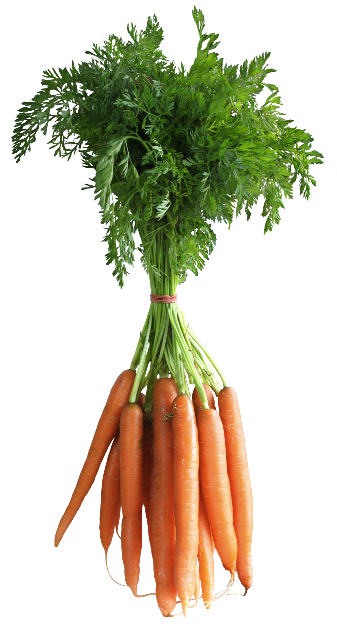 020 20 Carat Fruits And Vegetables Images Carrots Vegetable Pictures