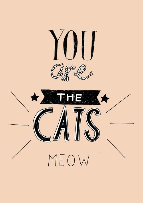 """the cat's meow - Archaic 1920s American slang that in various contexts refers to one or more of """"excellent"""", """"stylish"""", or """"impressive to the ladies"""".  Synonymous with the cat's pyjamas and the bees' knees"""