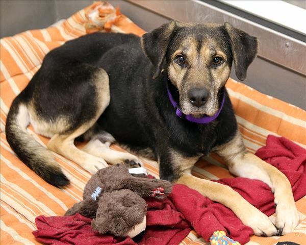 6 4 17 5 16 17 Gina Spca Of Texas Dallas 153424 Animal Rescue Animals Spca