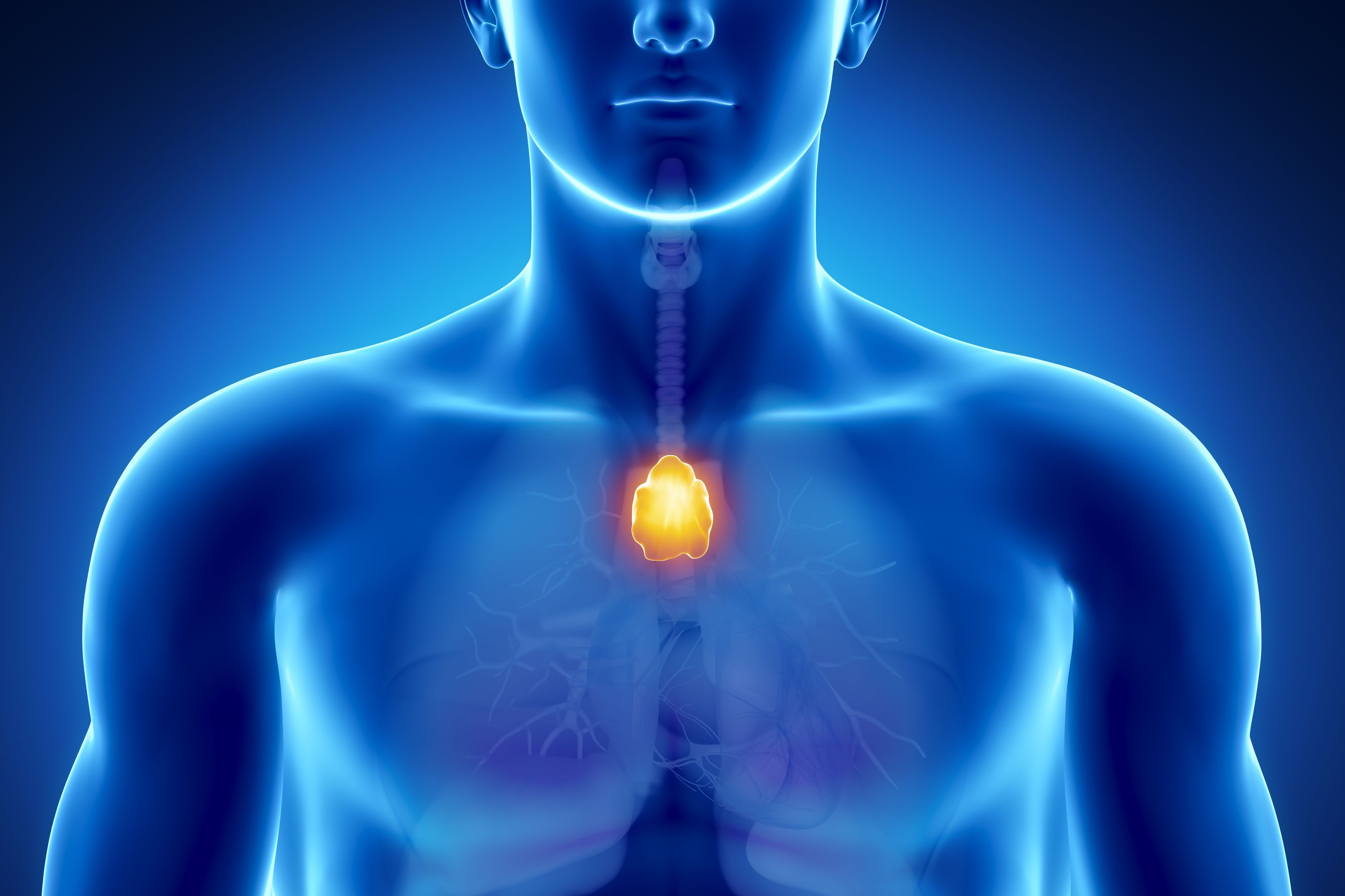 27+ What Is the Thymus Gland and Why Is It Important