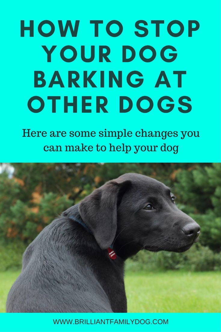 Helping Dogs Overcome Fear Of Loud Noises Fearful Dog Help