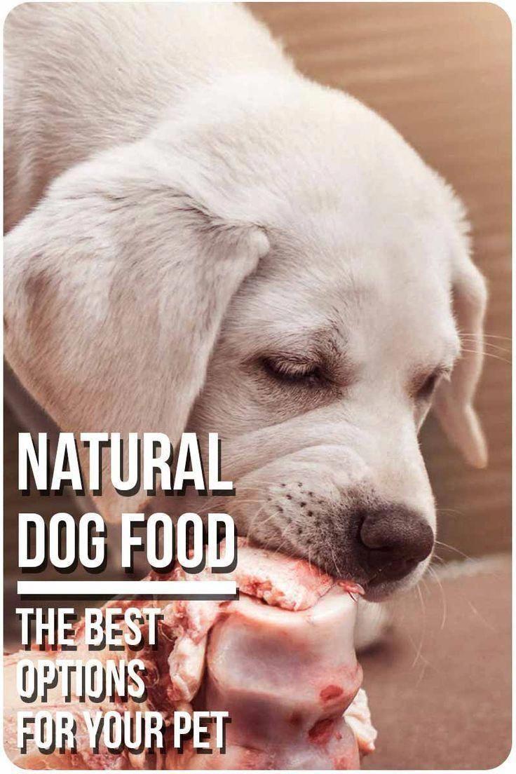 Dog Training Help Free Dogtrainingparko Dog Training Positive