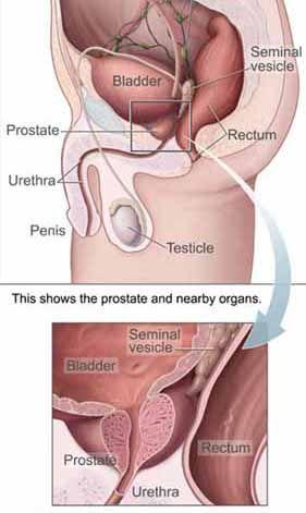 Prostate masturbation aid