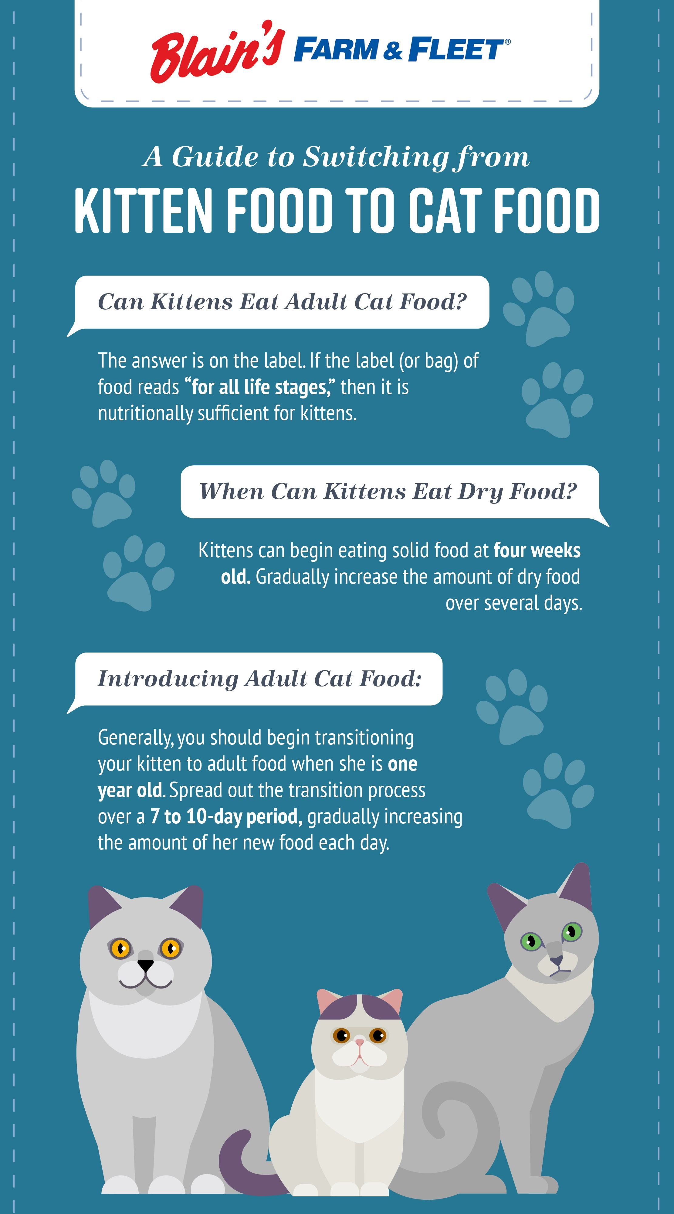 When To Switch From Kitten Food To Cat Food Kitten Food Kitten Formula Kittens