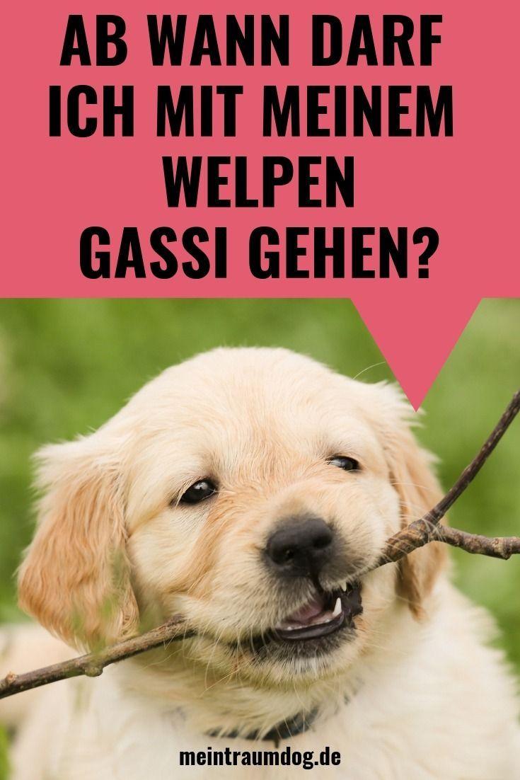 Ab Wann Darf Ich Mit Meinem Welpen Gassi Gehen In 2020 Sick Puppies Parvo Symptoms Parvo