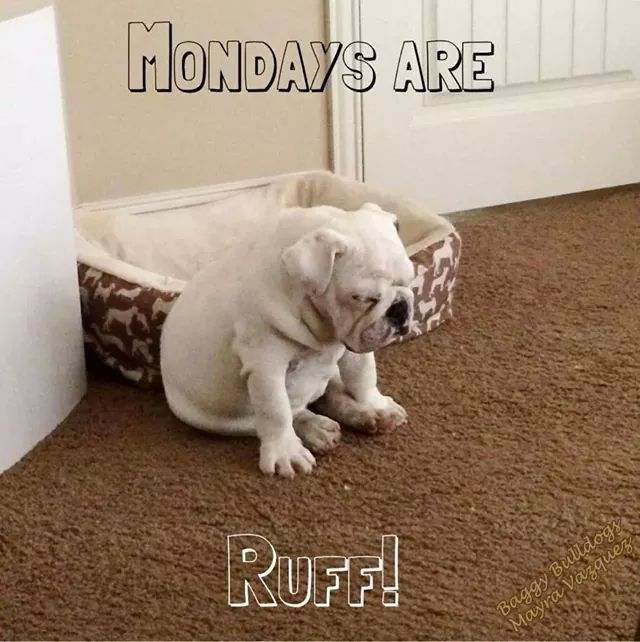Mondays Are Ruff Monday Good Morning Monday Bulldog English