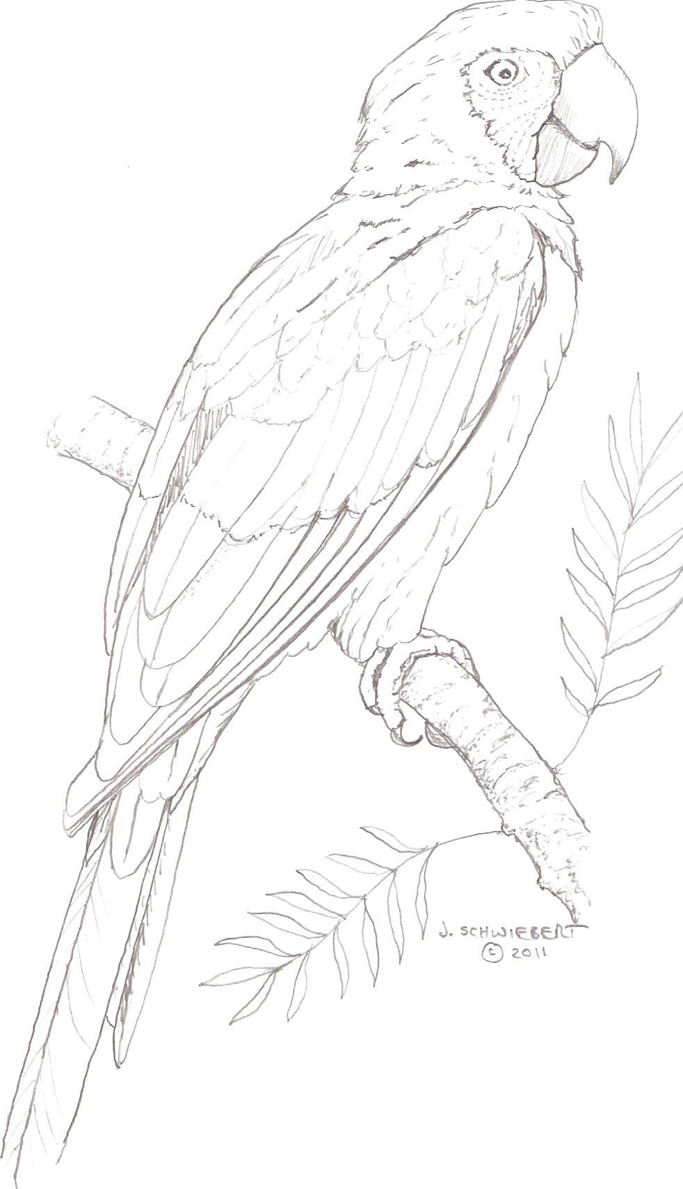 Macaw coloring page | Coloring pages | Pinterest | Adult coloring ...