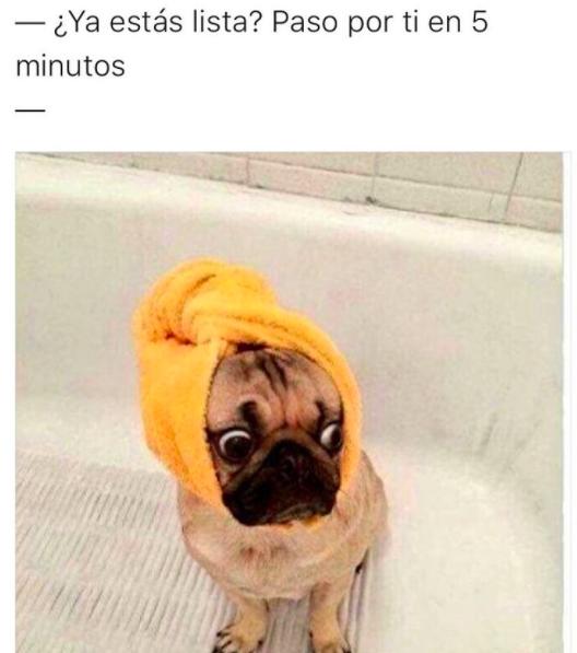 28 Memes De Perros Que Te Haran Derramar Lagrimas De Risa Pugs Funny Cute Pugs Baby Pugs